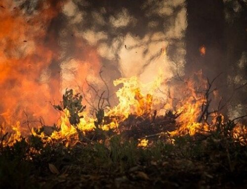 Gender reveal party revealed as cause of California wildfire